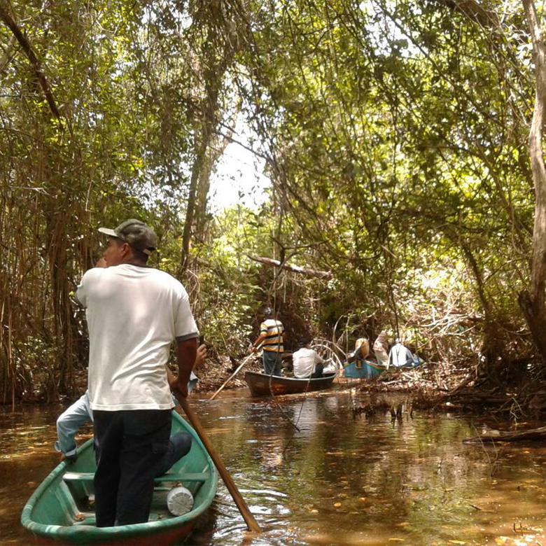 los-manglares